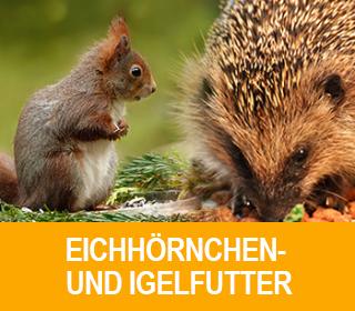 eichhoernchen-pro
