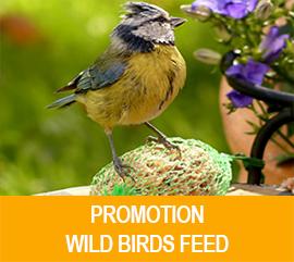 promotion_en