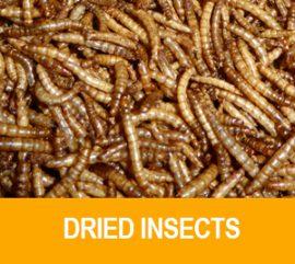 insekten_en